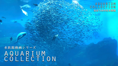 aquarium_collection_sendai