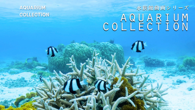 aquarium_collection_02